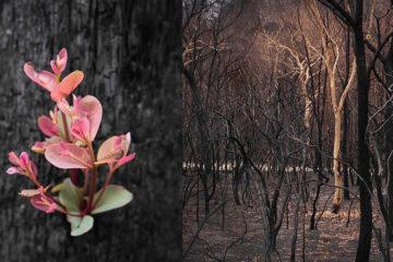 帶來希望!野火將大地燒成黑燼,「逆境之花」從焦木中重生