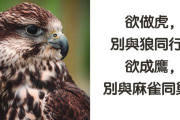 鷹,高瞻遠矚; 雀,目光短淺:志向不同,不必多言